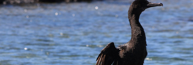 Galapagos animals that you can't find anywhere else | Galapagos Islands | South America travel