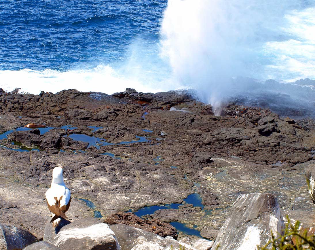 española-island-galapagos2.jpg