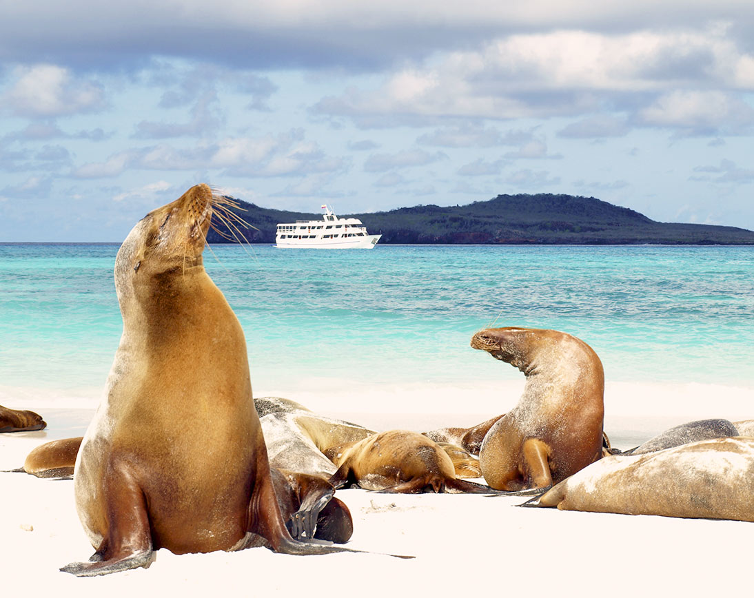Sea lions | Española Island | Galapagos islands