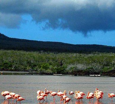 flamingos-galapagos-388x350.jpg