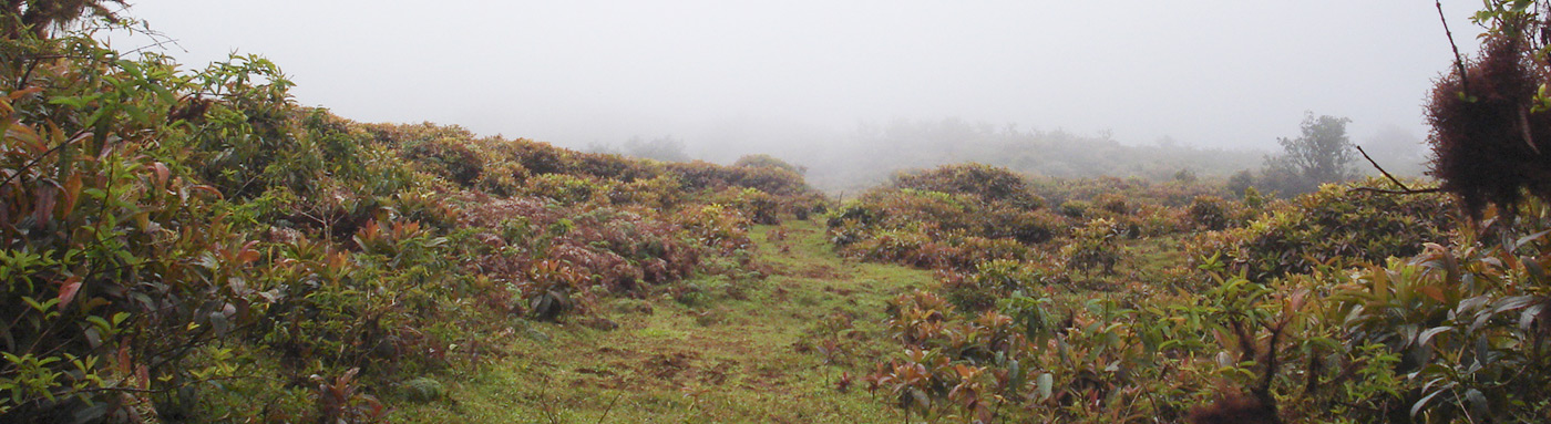 Vegetation Zones | Galapagos islands | Galapagos cruises