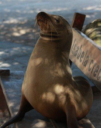 Fur Seals & Sea Lions
