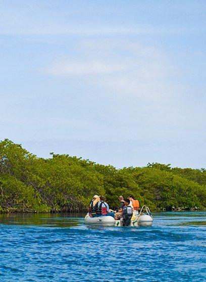 Galapagos Mangrove
