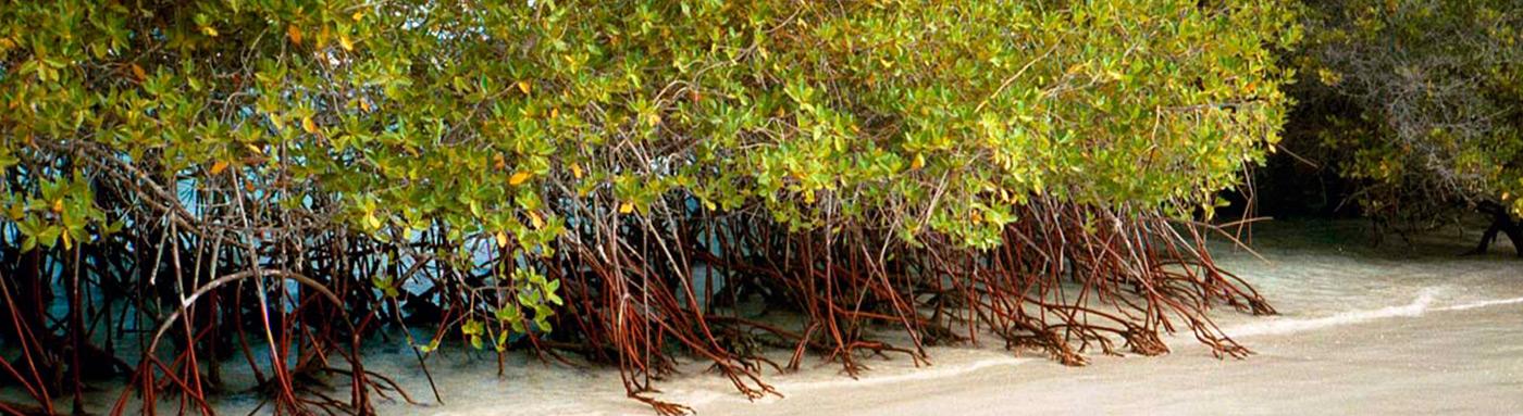 Mangroves | Galapagos islands | Galapagos cruises