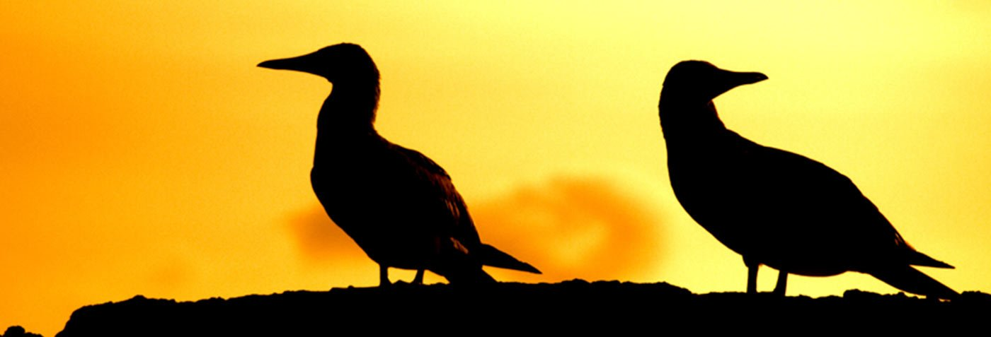 How to Find the Perfect Sunsets in Galapagos? | Galapagos Islands | South America travel