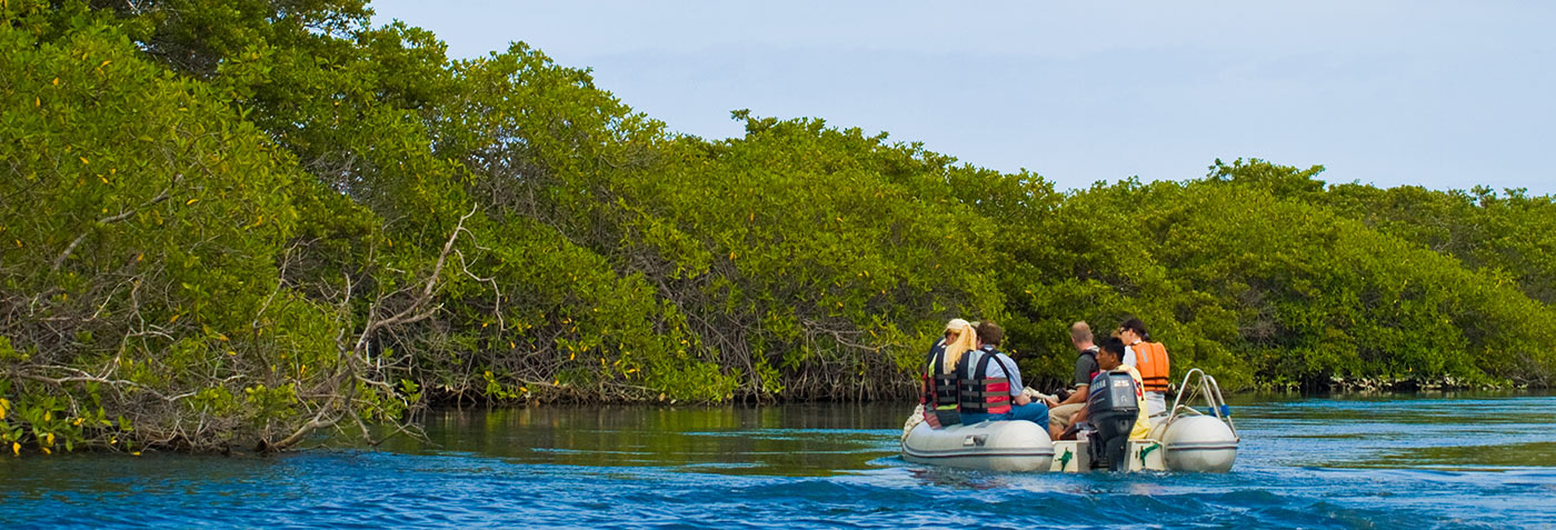 Galapagos Hotel based Tours vs Cruise Expeditions | Galapagos Islands | South America travel