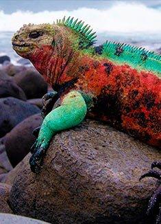 January | Galapagos Islands