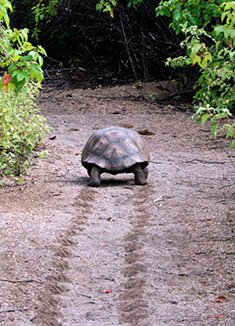 June | Galapagos Islands