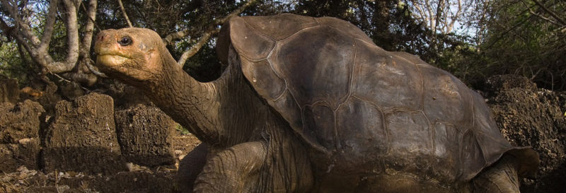 Will Lonesome George Ever Rest In Peace A Bizarre Custody Battle