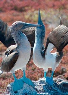 May | Galapagos Islands