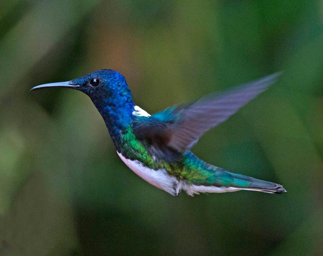 Mindo Birdwatching Tour