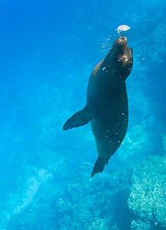 November | Galapagos Islands