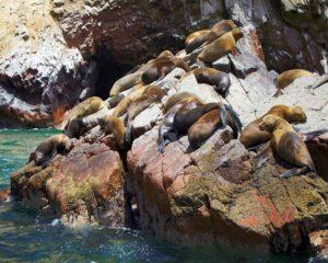 Explore Paracas