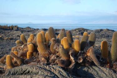 Fernandina Island | Galapagos | Galapagos Islands
