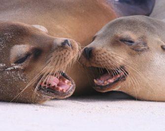 Sea lions Island I Galapagos