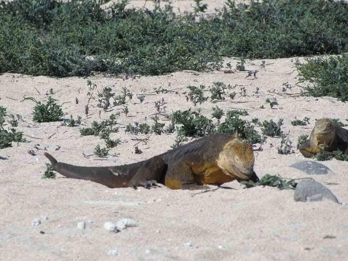 North Seymour Island | Galapagos