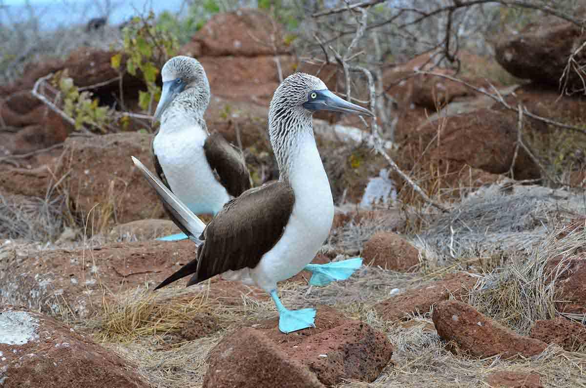 North Seymour Wildlife | Galapagos
