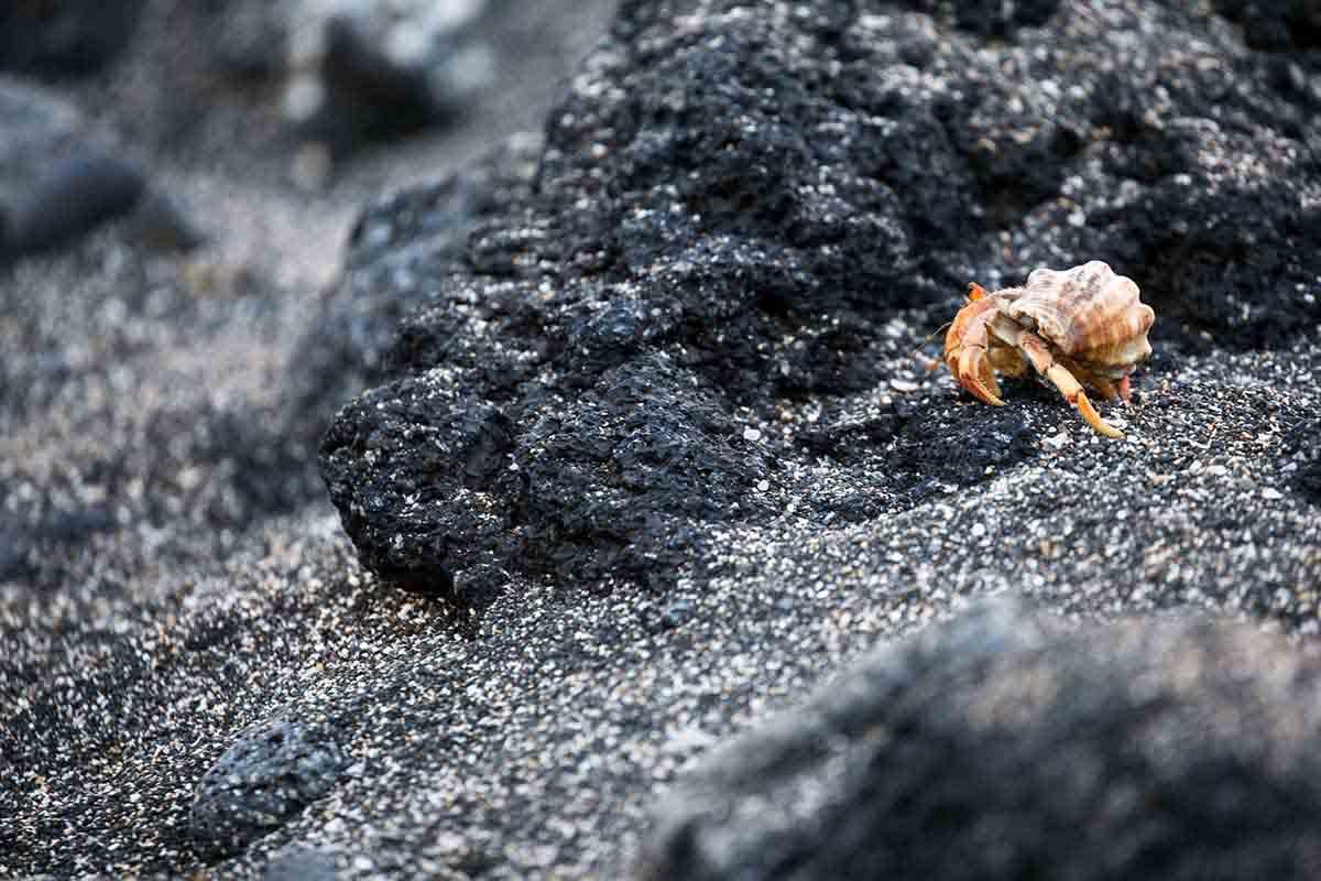 Urbina Point I Galapagos