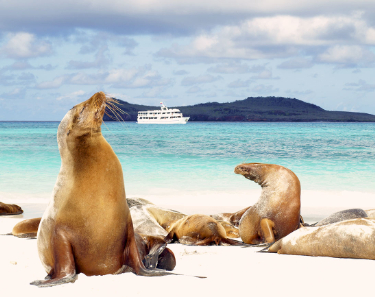 Sea lions I Galapagos