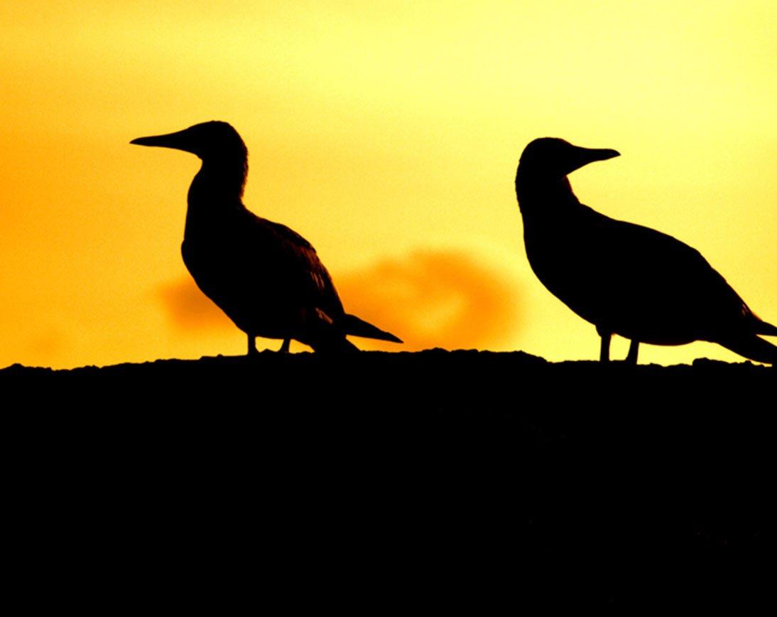 Floreana I Galapagos