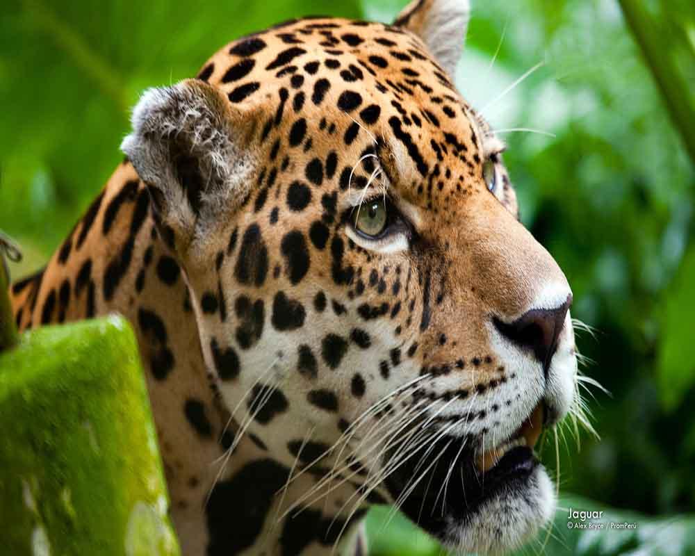 Ecuador Wildlife | Ecuador