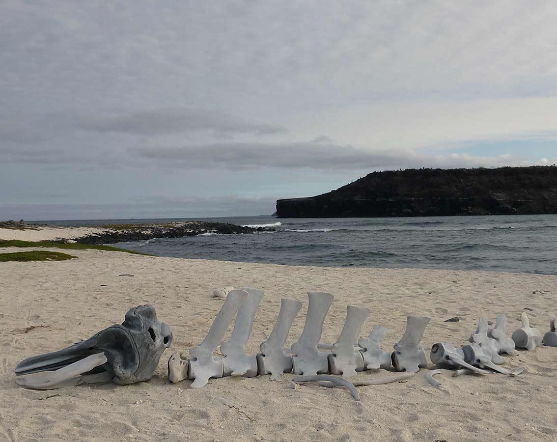 Mosquera Island I Galapagos