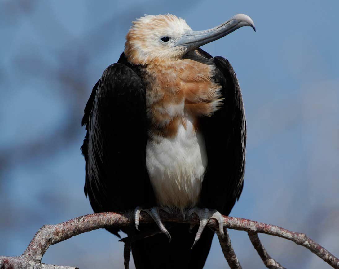 North Seymour | Galapagos