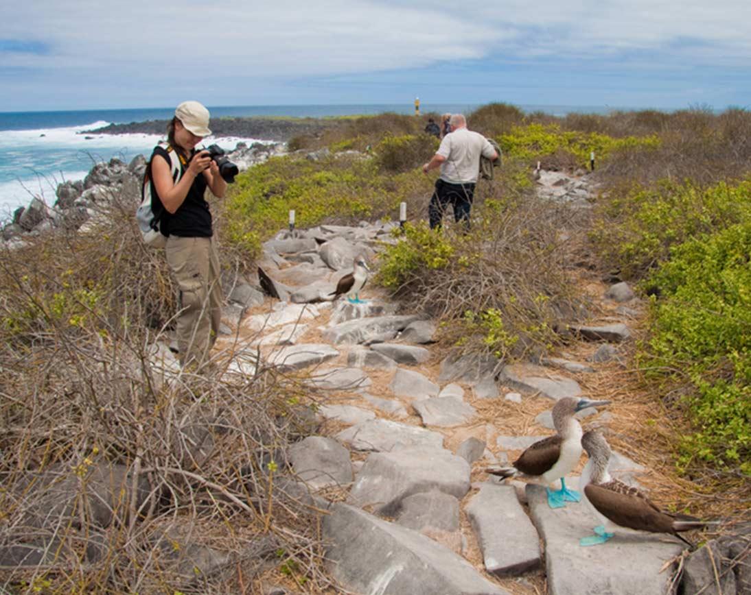 Blue Footed | Galapagos