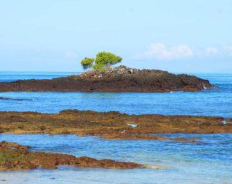 Santa Cruz Island I Galapagos