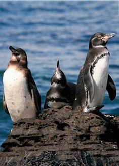 September | Galapagos Islands