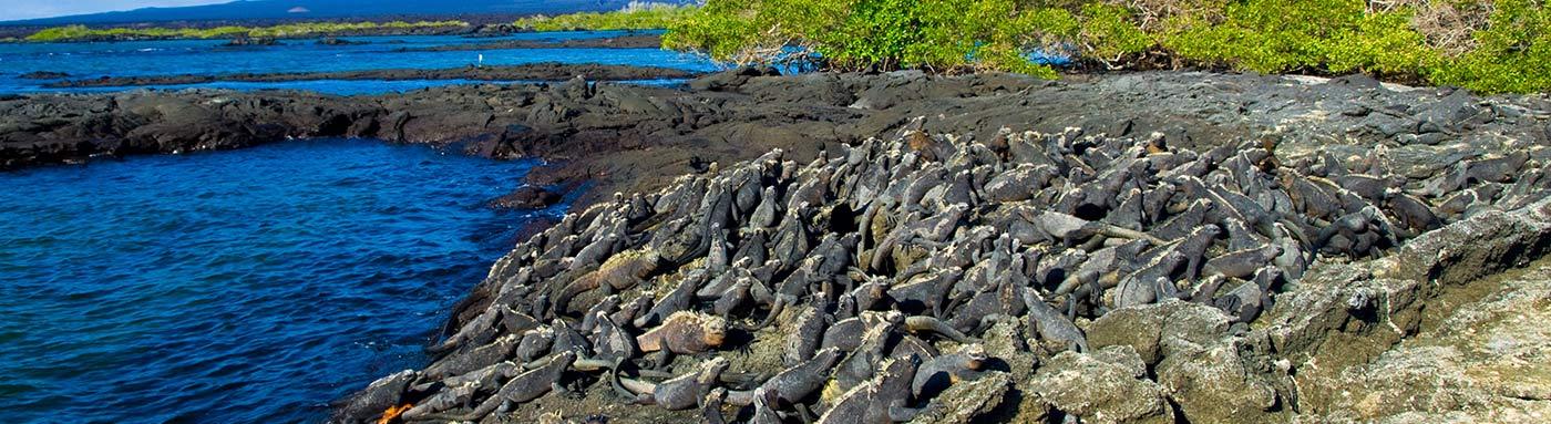 National Park  | Galapagos islands | Galapagos cruises