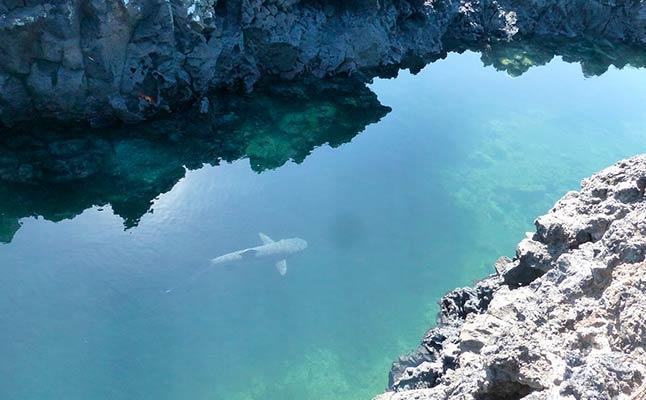 tintoreras-galapagos-islands.jpg
