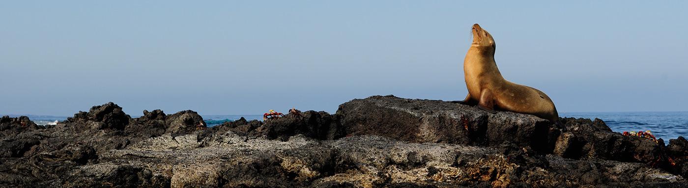 When to visit | Galapagos islands | Galapagos cruises