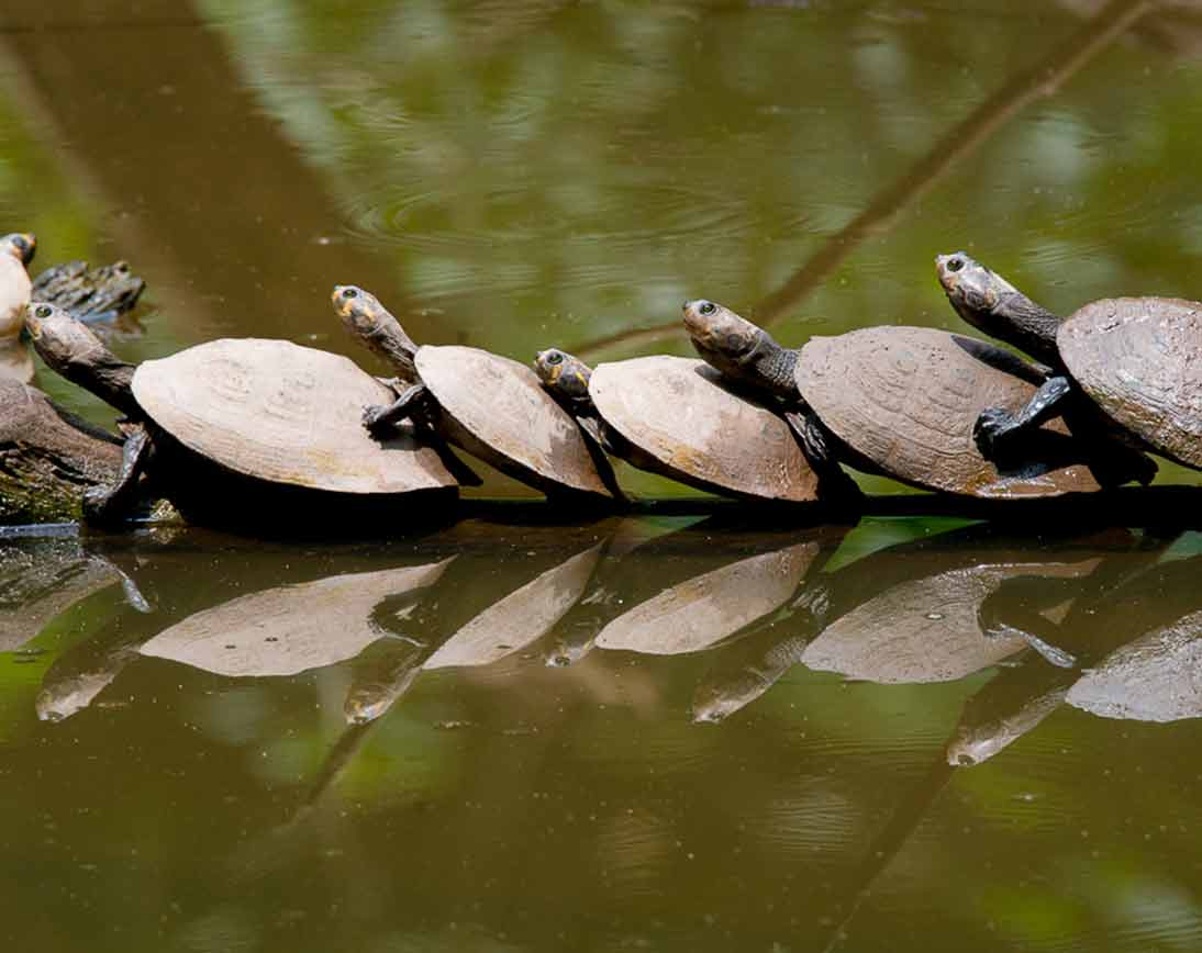 Turtles | Wildlife Tour | Ecuador