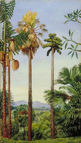 KPPCONT_062053_fullsize Palm Type Plants Common House on palm names types, short palm trees types, office plant types, palm tree plant types, house cactus types, phoenix palm trees types, potted house plants types, indoor houseplants types, house ferns types,