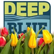 Deep Blue - Spring