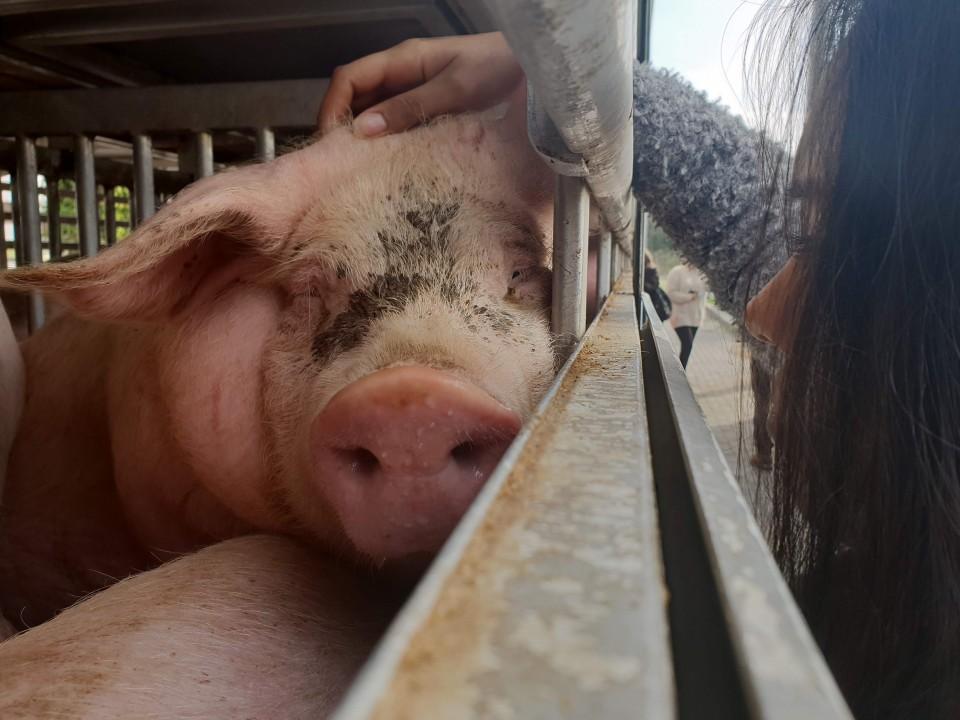 "Braga Animal Save realizou vigília de ""despedida"" de animais a caminho do matadouro"