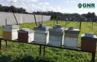 Detido por furto de colmeias em Esposende