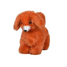 Brown Small Teddy Dog