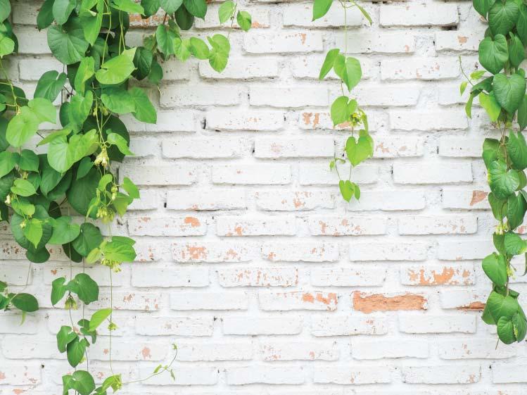 ปล่อยให้ต้นไม้ทิ้งตัวตามแรงโน้มถ่วงโลก