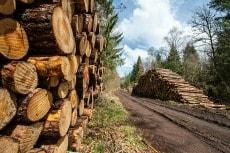 L'énergie biomasse : bois en bûche ou en granulés