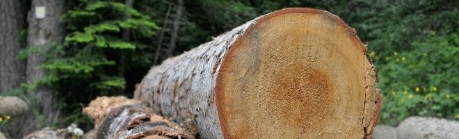 Bois-biomasse- forêt-chauffage (1)-min