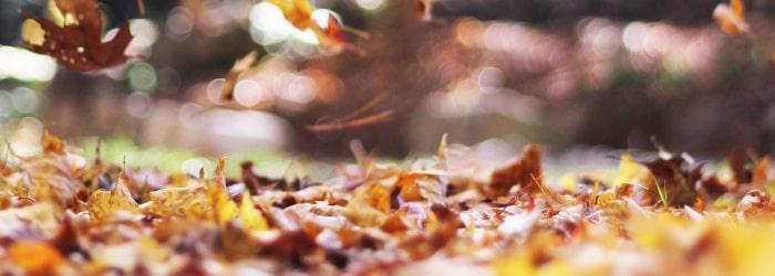 rénovation automne