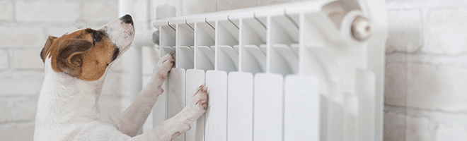 chien-radiateur-min2