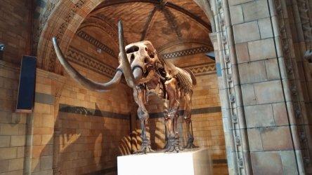 Visita ao Museu de História Natural em Londres