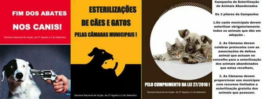 Campanha Esterilização Animais Abandonados