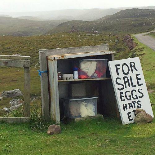 """""""Vendem-se ovos"""" diz a placa. Mas vendedor nem vê-lo."""