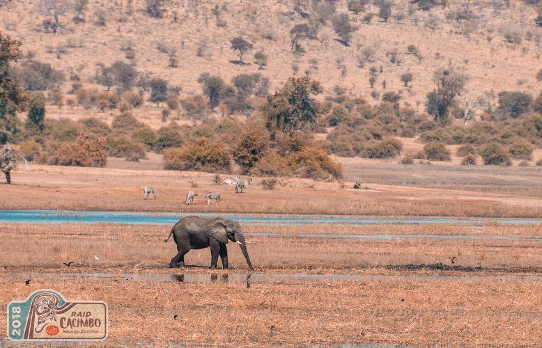 O turismo africano está mais rico - todos os caminhos levam a KAZA
