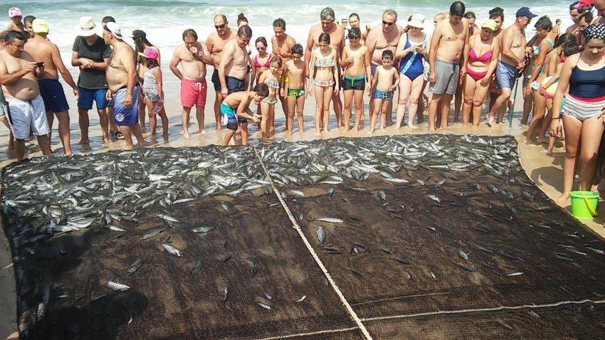Arte xávega continua a ser atividade na Praia da Vieira