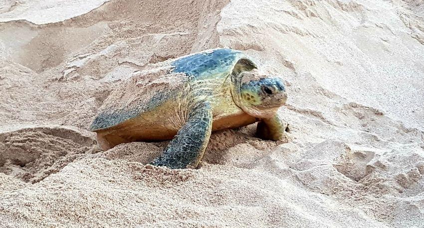 Tartarugas em Omã